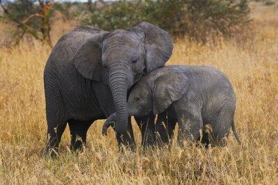 Картина Братья Elephant