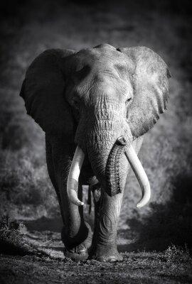Картина Слон быка (Художественная обработка)