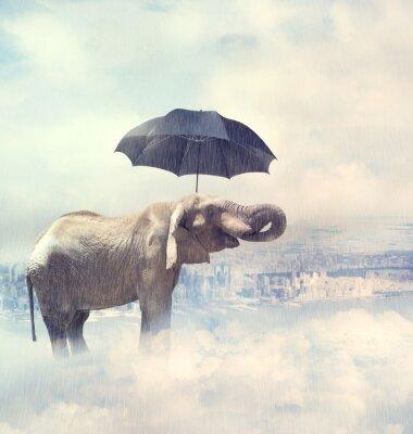 Картина Слон наслаждаясь дождь avobe города на облаках