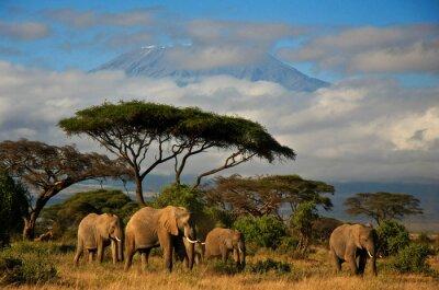Картина Килиманджаро