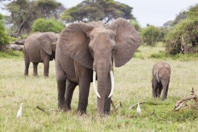 Картина Elephant Family в Кении