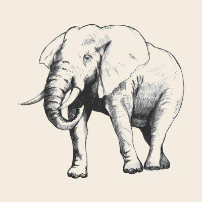 Картина Слон эскиз