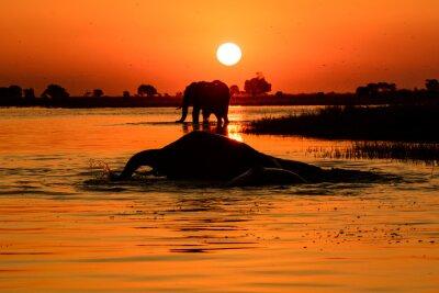 Картина Слон закат