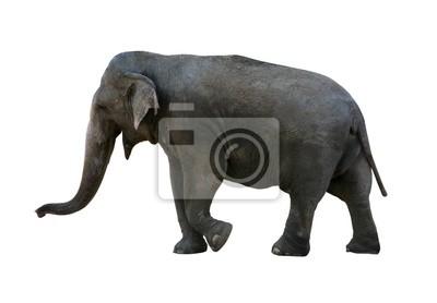 Слон с отсечения путь