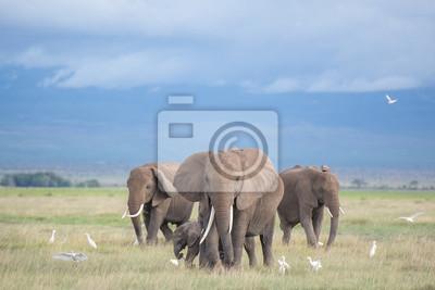 Картина слоны Амбосели в семье /