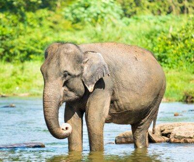 Картина Elephatnt