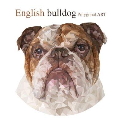 Картина Английский бульдог. Многоугольная рисунок ..
