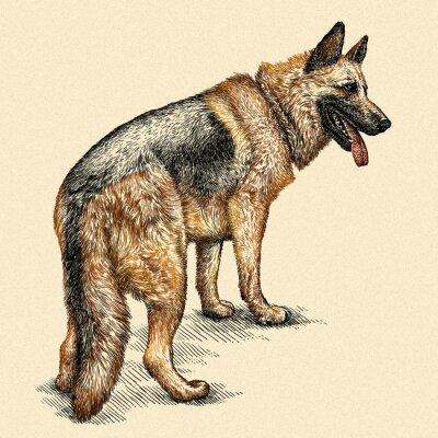 Картина выгравировать собака иллюстрации