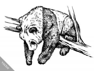 Картина выгравировать чернила ничья панда иллюстрации