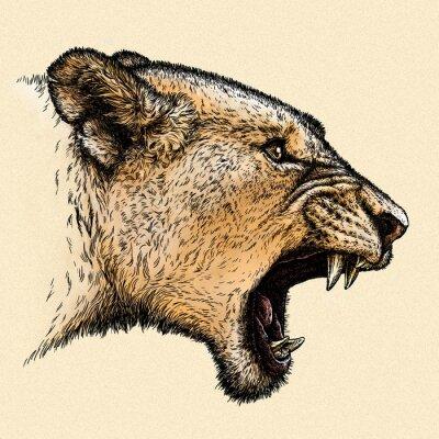 Картина выгравировать лев иллюстрации