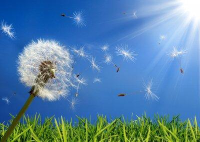 Картина эксклюзив - аллергия концепция весной