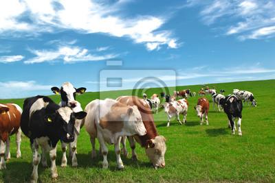 Картина Bauernhof
