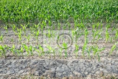 Картина сельское хозяйство 2
