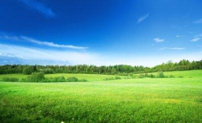 Картина поле травы и совершенный небо