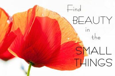 Картина Найти красоту в мелочах. Мотивация вдохновляющим цитаты