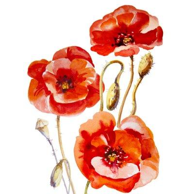 Картина Flower field poppy