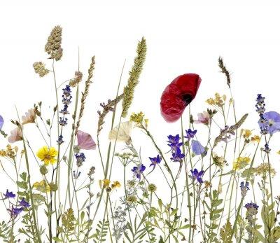 Картина цветы и травы