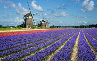 Картина Цветы и ветряные мельницы в Голландии