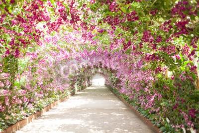 Картина тропинка в ботаническом саду с орхидеями, выстилающих путь.