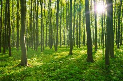 Картина лес весной