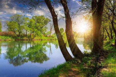 Картина лес река с камнями и травой на закате