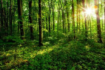 Картина лесные деревья
