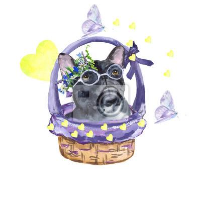 Картина Французский бульдог. Собака породы Французский бульдог в корзине. Любовь, весна, бабочки. Акварельная живопись. Может использоваться для открыток, гравюр и дизайн