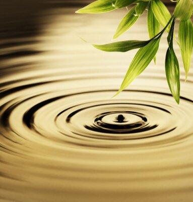 Картина Свежий листья бамбука над водой