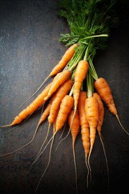 Картина Свежая морковь