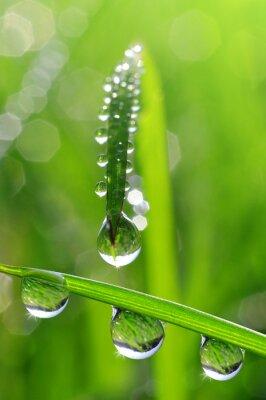 Картина Свежая трава с каплями росы крупным планом
