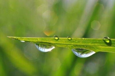 Картина Свежей зеленой траве с капли росы крупным планом. Природа фон