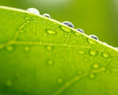 Картина Свежий зеленый лист фона