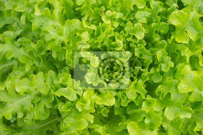 Свежий зеленый фон салата