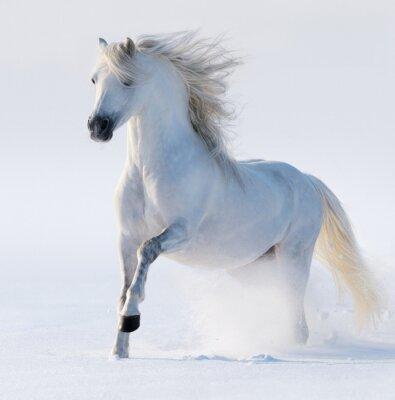 Картина Galloping белоснежная лошадь