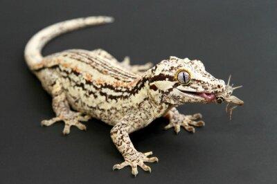 Картина Горгулья Gecko питание