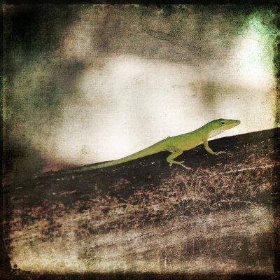 Картина Gecko Зеленый Cameleon Ящерица на Брауна лесной отрасли