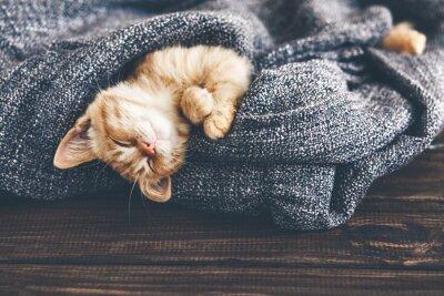 Картина Gigner котенок спит