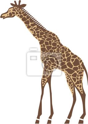 Жираф-векторные иллюстрации