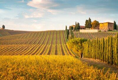 Картина Golden vineyards in autumn at sunset, Chianti Region, Tuscany, Italy
