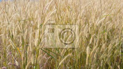 травой поле