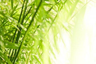 Картина Зеленый бамбуковый фон