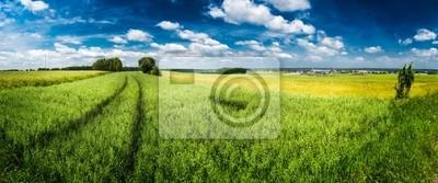 Зеленые поля панорама