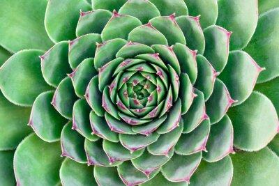 Картина зеленый цветок