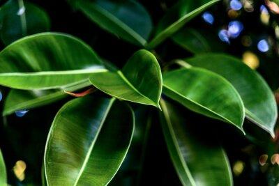 Картина Green fresh leaves