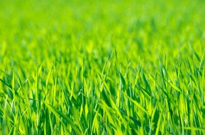 Картина Зеленая трава