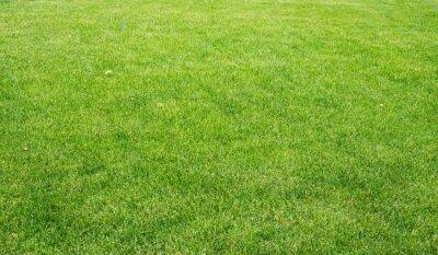 Картина Зеленый газон