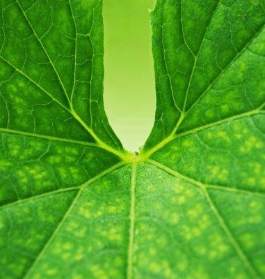 Картина Зеленый лист фон