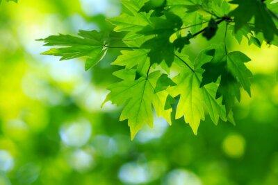 Картина зеленые листья