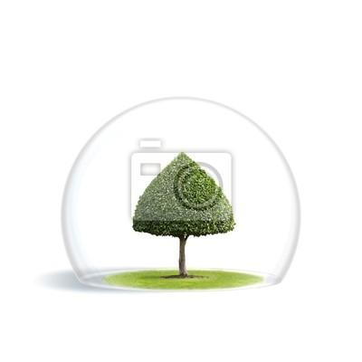 Зеленое дерево находится под защитой