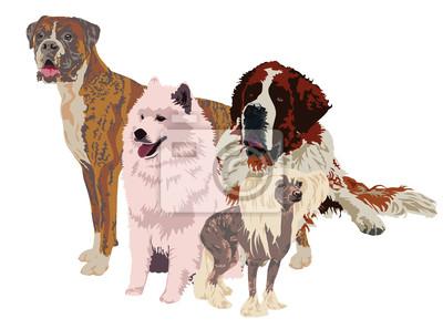 группа собак различных пород